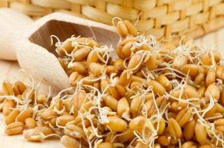 пшеница пророщенная
