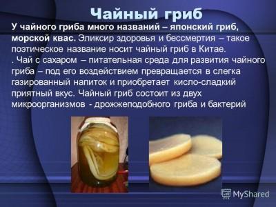 чайный гриб свойства