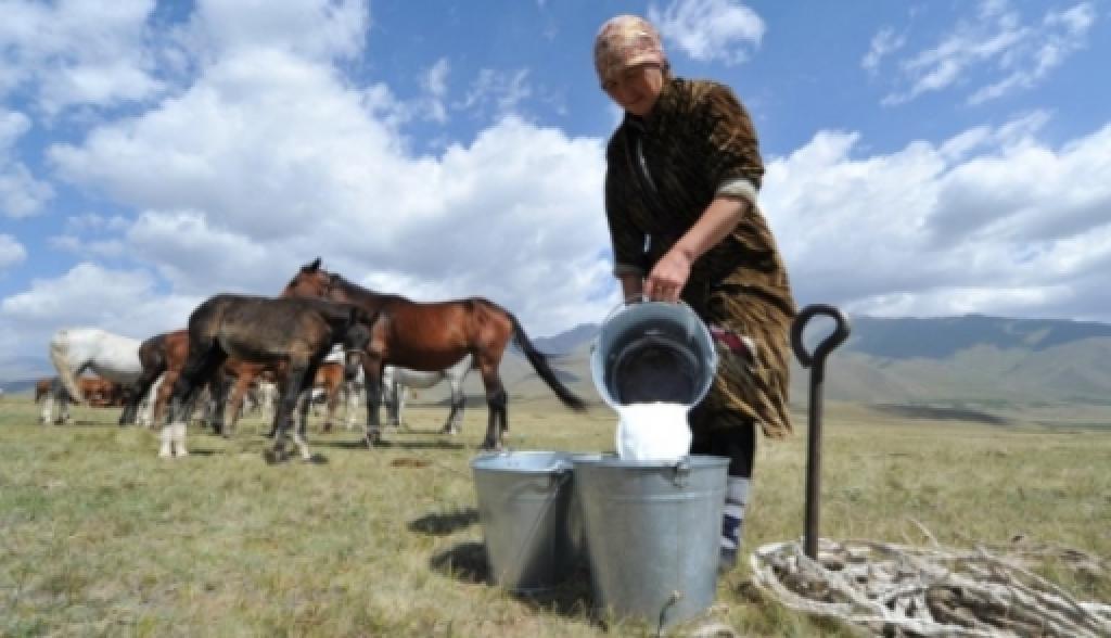 польза молока с под кобылы