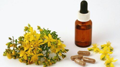 Зверобой - полевой многолетник с лечебными свойствами
