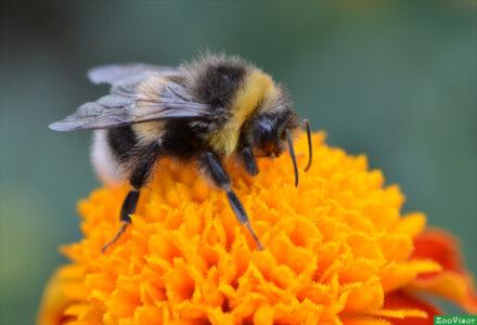 Десенсибилизацию к яду насекомых невозможно остановить! Спасает жизнь
