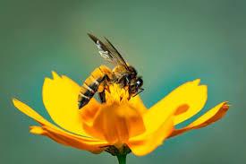 Пчелиный яд может обладать противораковыми свойствами