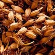 Солод- проросшее зерно