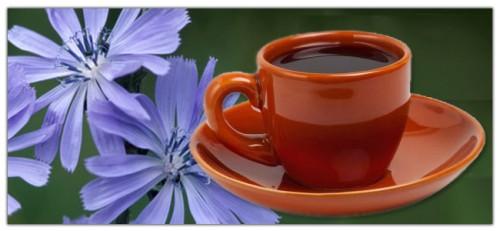 чай из цикория