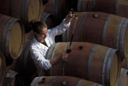дегустация контроль вина