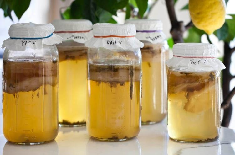 Как пить чайный гриб при грибке ногтей