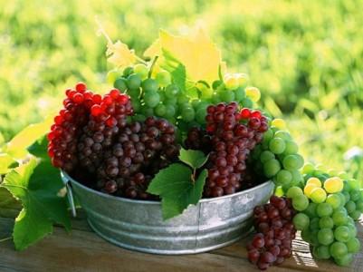 виноград для domashnee-vino-