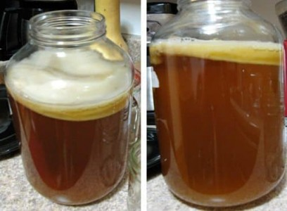 the-health-benefits-of-kombucha-immortality-tea-featured