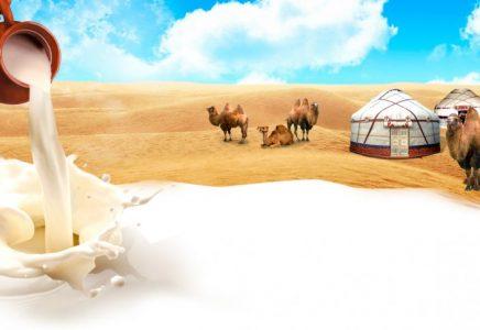 Молоко верблюдицы