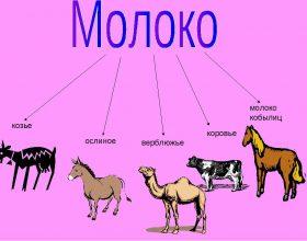 Молоко буйволих