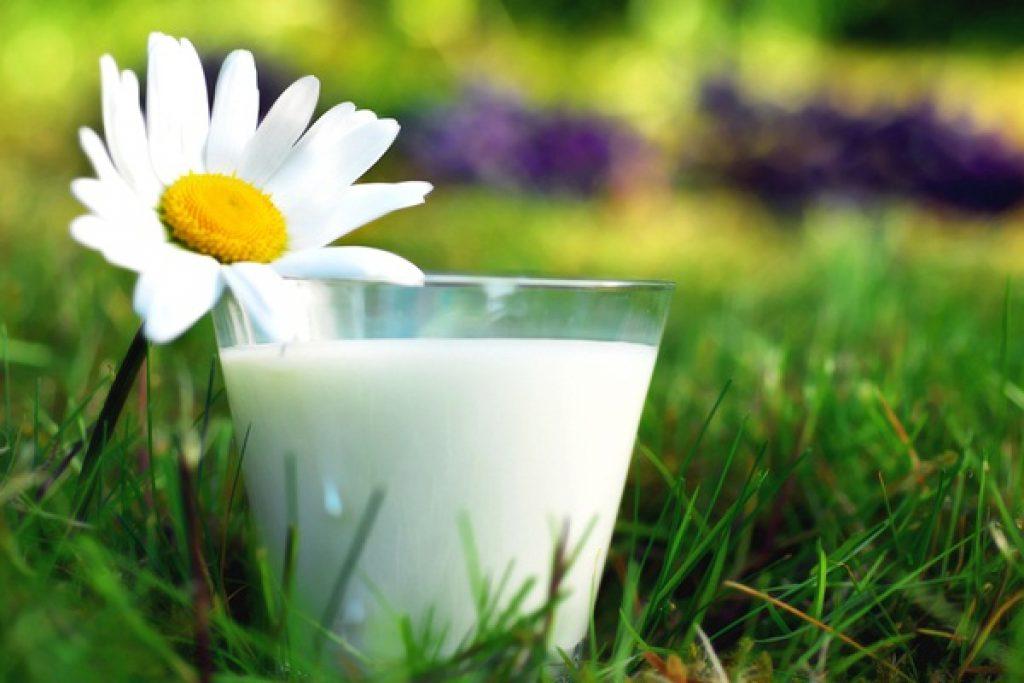 стакан-молока-на-траве