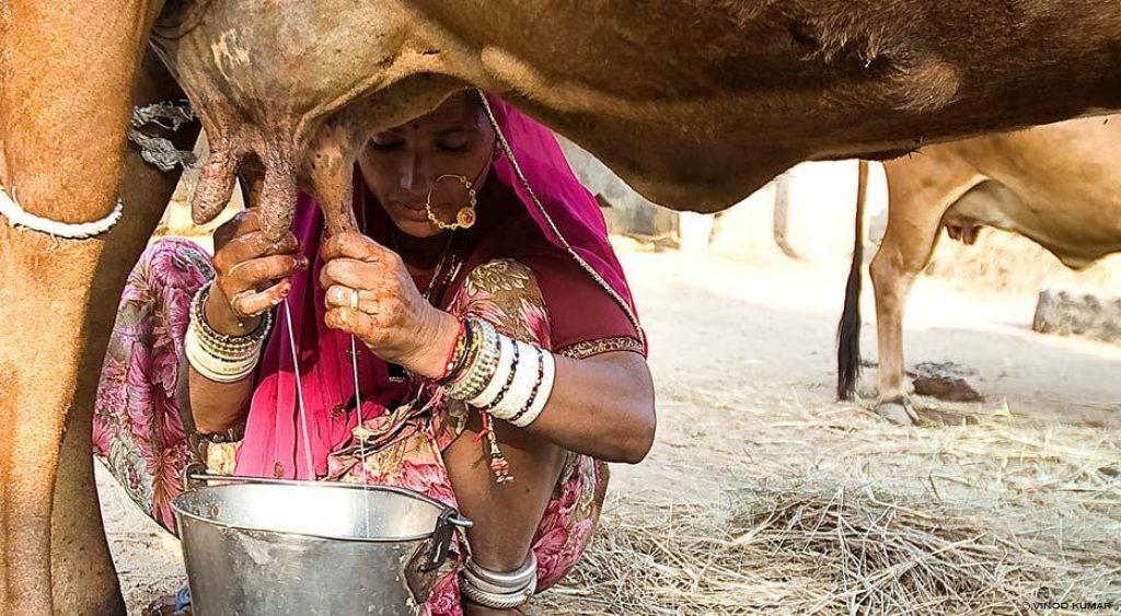 buffalo-milk