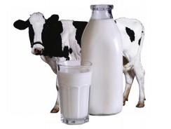 Правда и мифы о молоке