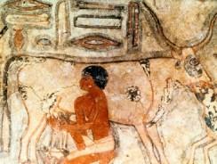 История молока и его состав