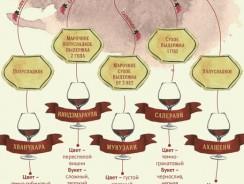Классификация вин и их виды