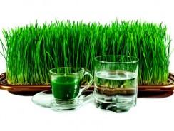 Напиток здоровья из пророщеной пшеницы