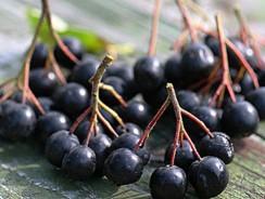 Арония-самогон из черноплодной рябины